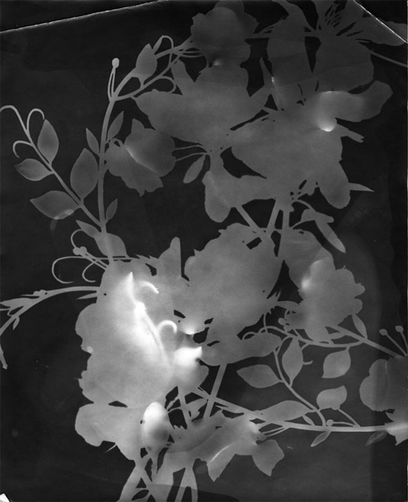 Untitled (Flower Study)