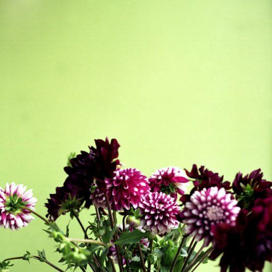 John Arsenault, Tate-Flowers
