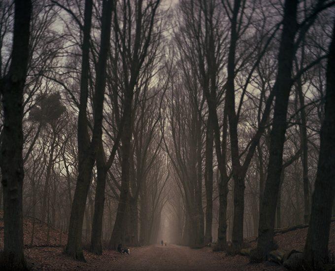 Joshua Lutz, Untitled (On a Path)