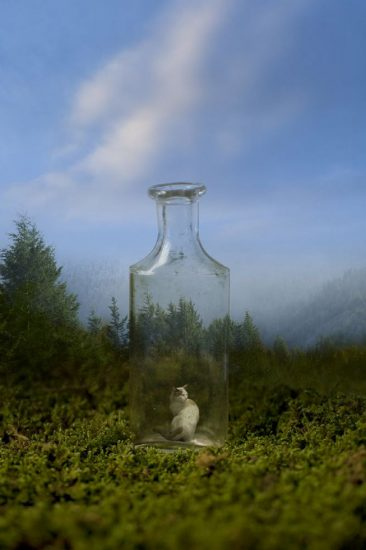 Marc Yankus, Bottle in the Woods