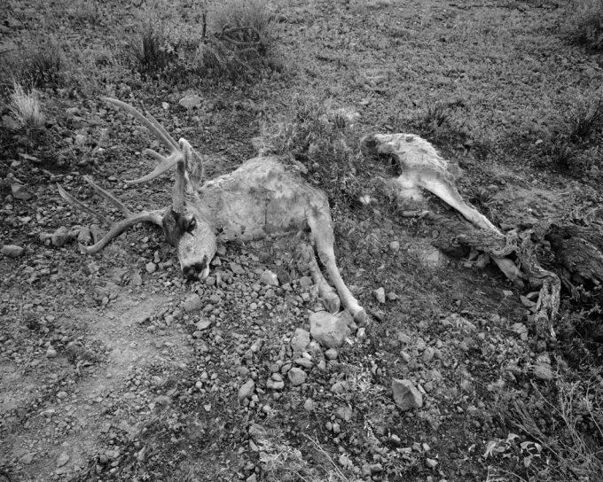 Michael Lundgren, Lion's Kill