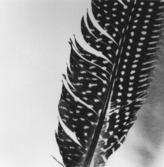 Jeannette Montgomery Barron, Feather 2