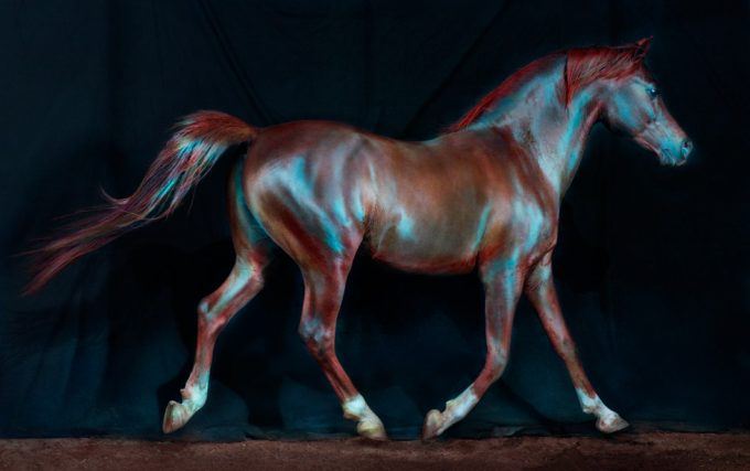 Jill Greenberg, Horse 173, Eadweard Muybridge