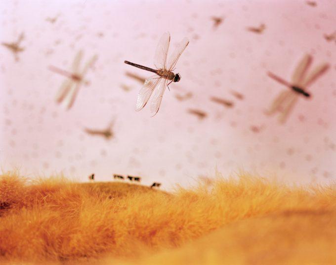 Lori Nix, Insect Infestation
