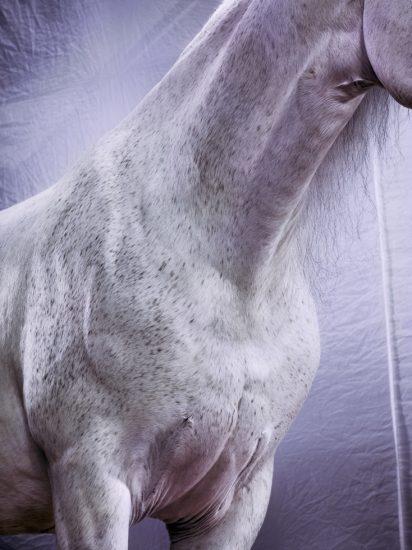 Jill Greenberg, Horses, Romero 1161