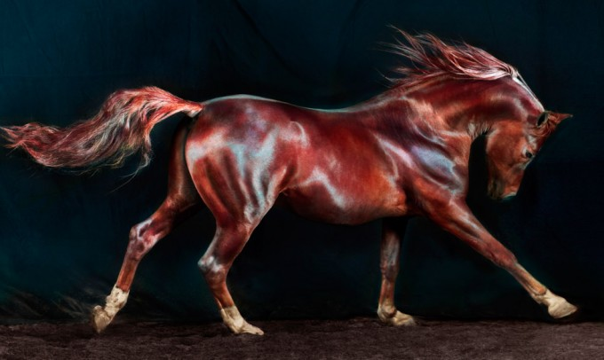 Jill Greenberg, Horses, Sid 174