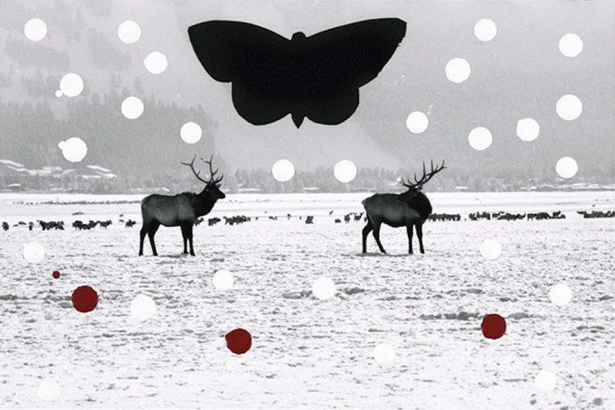 Stan Gaz, Winter Game