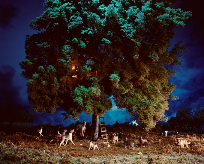 Lori Nix, Treehouse