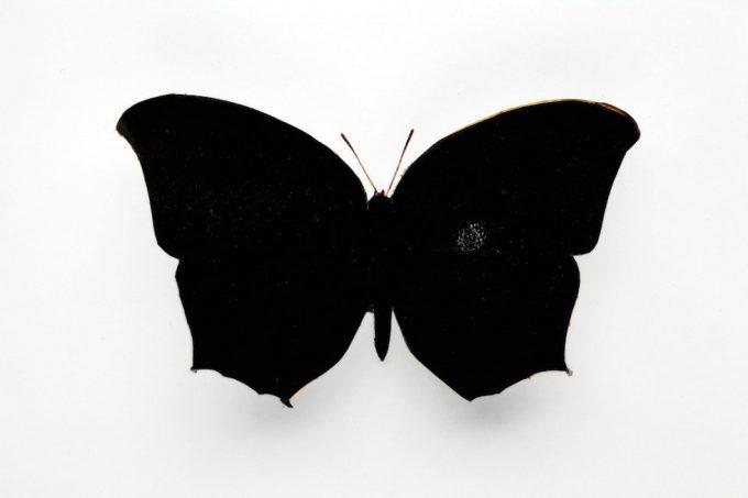 Stan Gaz, Butterfly 2