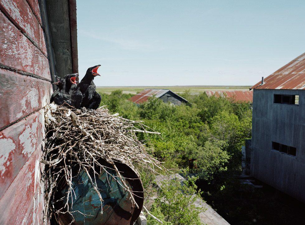 Graveyard Roosters