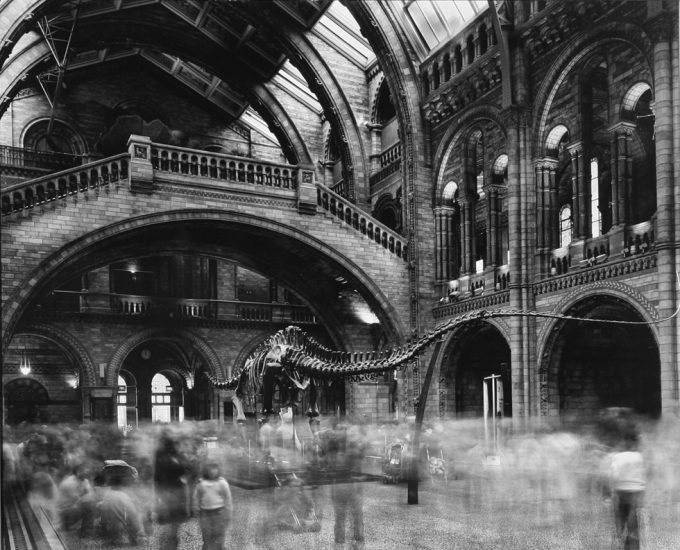 Matthew Pillsbury, Wyoming Diplidocus, Natural History Museum, London