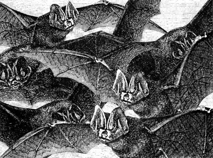 Stacey Steers, Bat's Retreat