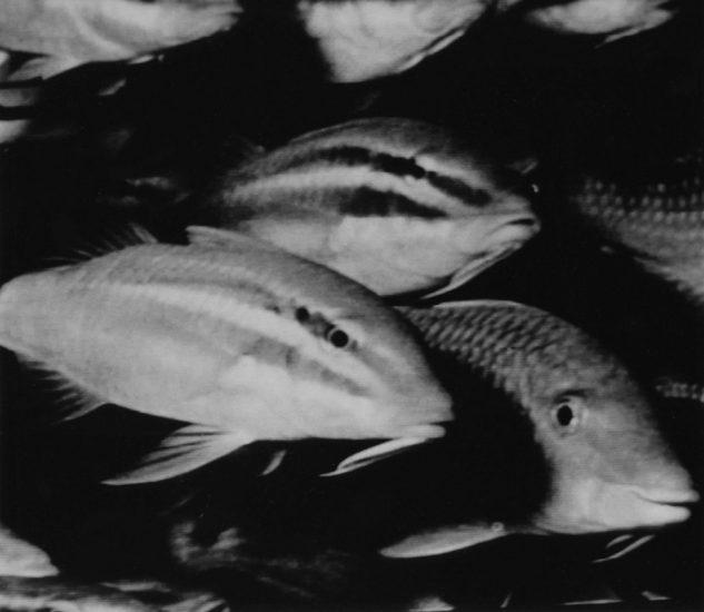 Nancy Burson, Happy Fish