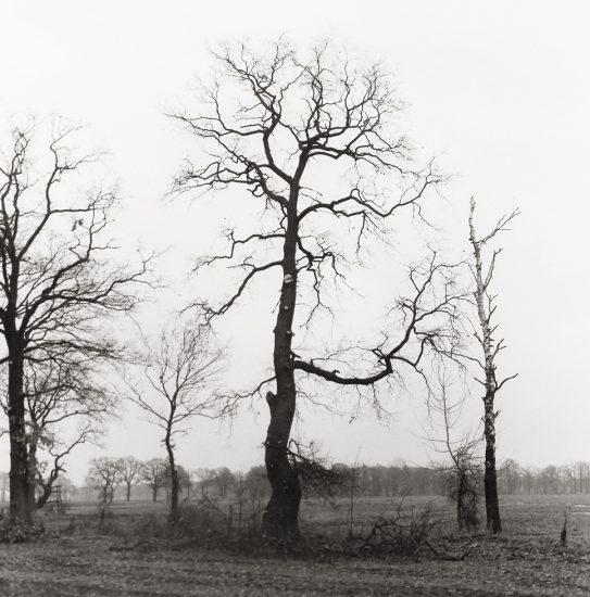DietmarBusse, Tree