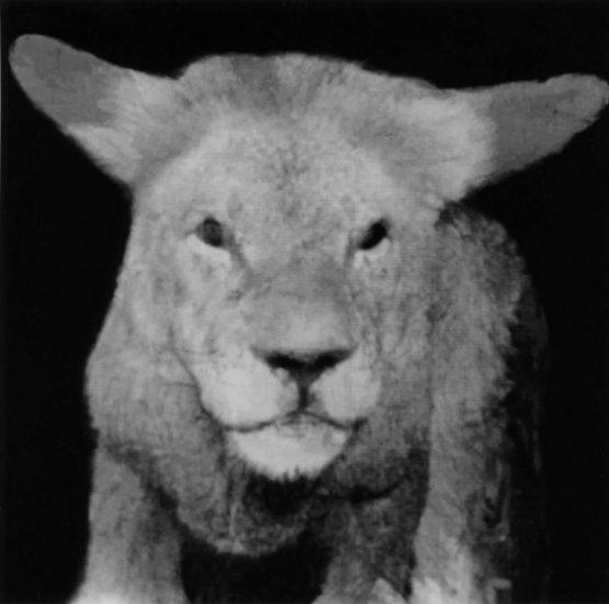 Nancy Burson, Lion Lamb