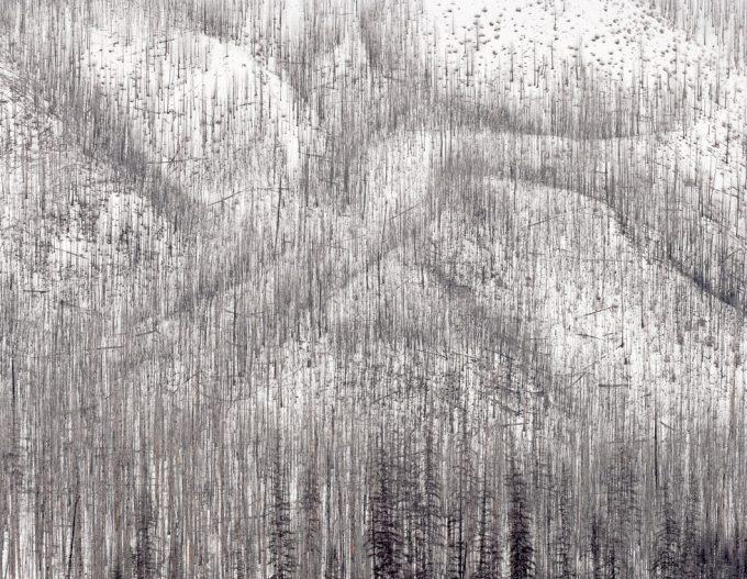 David Nadel, Burn #72