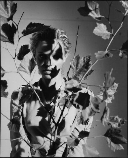 David Salle, Untitled
