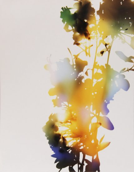 James Welling, 001, A+7 (from Flowers)