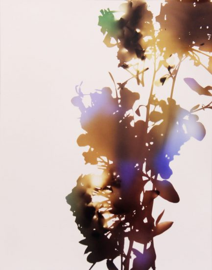 James Welling, 001, A (from Flowers)