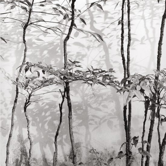 Alan Ostreicher, Untitled 417-9