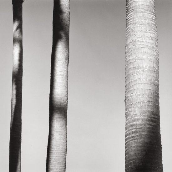 Alan Ostreicher, Untitled 507-12