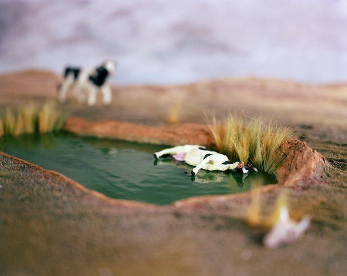 Lori Nix, Cow