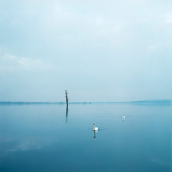 Evzen Sobek, Swans