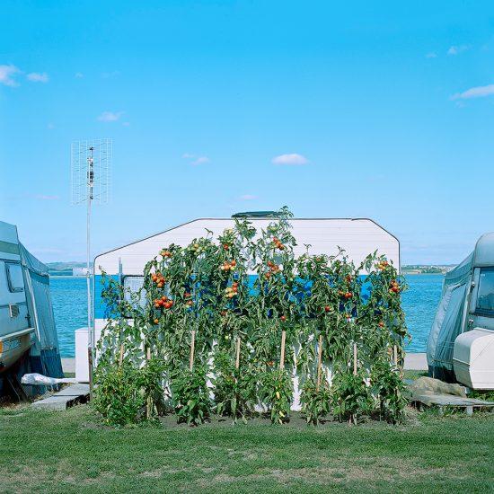 Evzen Sobek, Tomato Plants