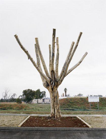 Amy Stein, Cut Down Tree I, Balranald