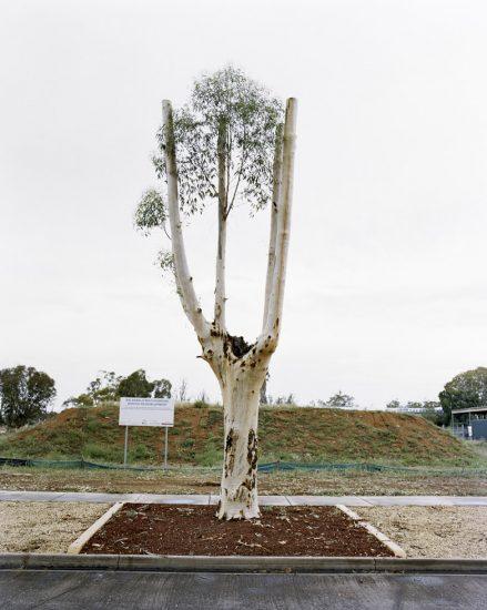 Amy Stein, Cut Down Tree II, Balranald