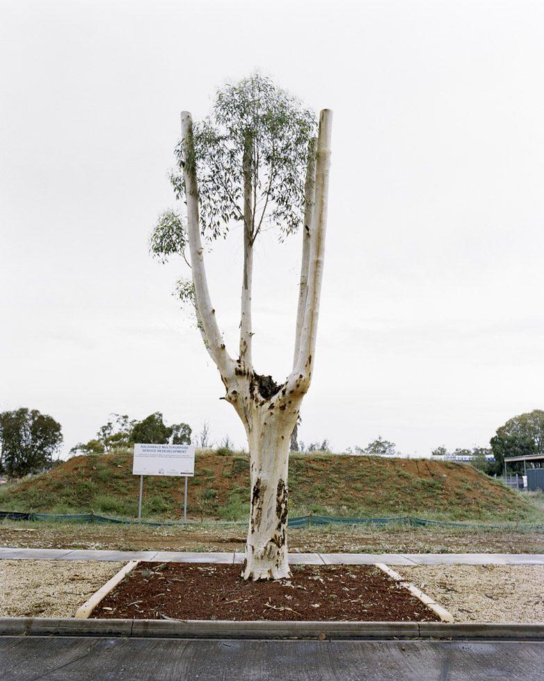 Cut Down Tree II
