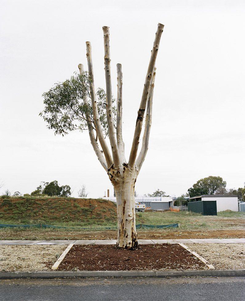 Cut Down Tree III