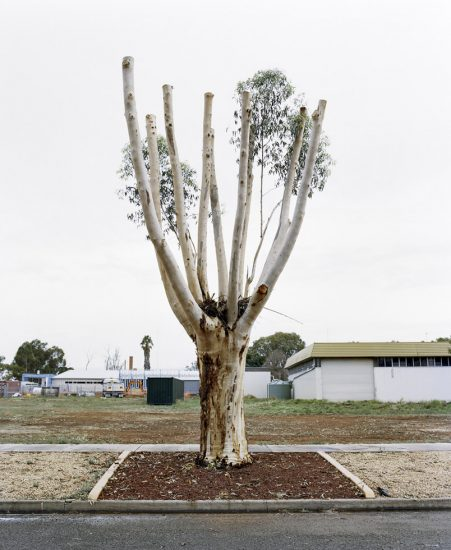 Amy Stein, Cut Down Tree IV, Balranald