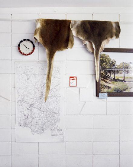 Amy Stein, Kangaroo Hides