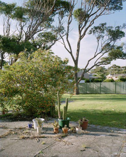 Amy Stein, Plants, Mollymook
