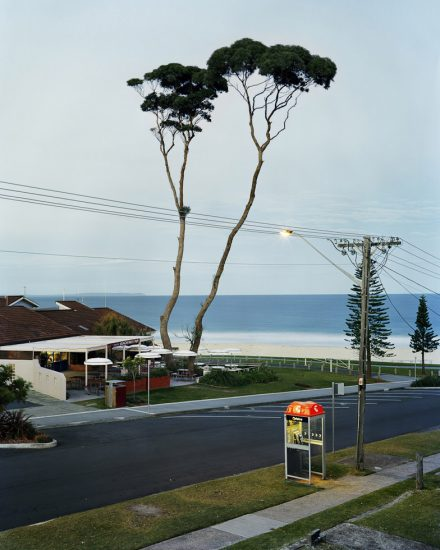 Amy Stein, Two Tall Trees, Mollymook