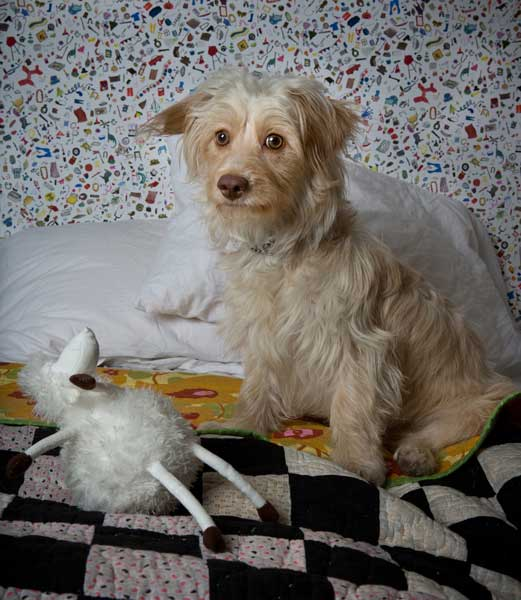 Robin Schwartz photographs Lena Dunham's new dog, Lamby, for The New Yorker