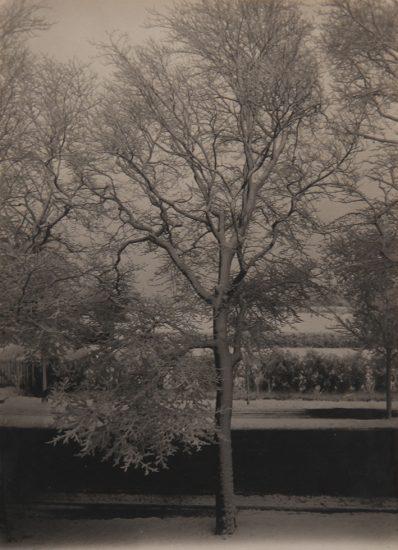 Piet Zwart, Tree