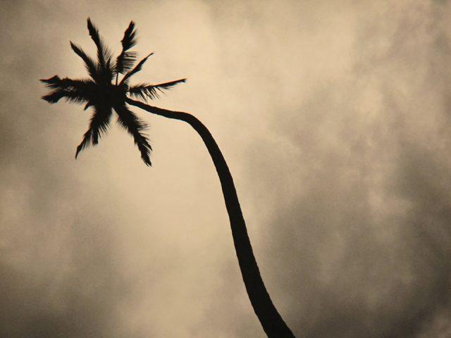Rick Chapman, Palm, Hawaii