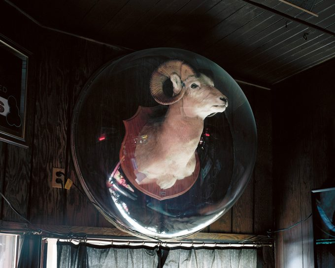 Bryan Schutmaat, Ram Under Plexiglass, Milltown, Montana