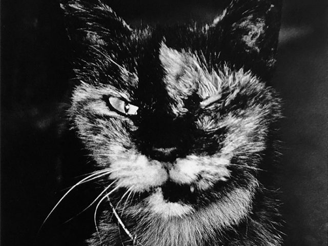 Daido Moriyama, Cat