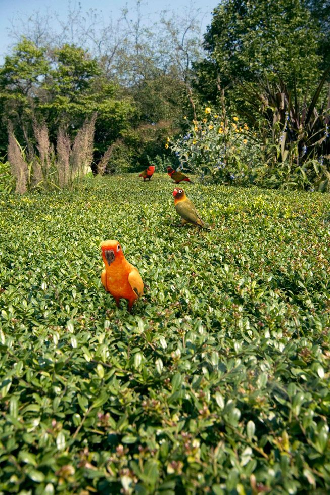 Bird Mix: Sun Conure (Aratinga solstitialis), Black-capped Lory (Lorius lory), and Masked Love Bird (Agapornis personatus)