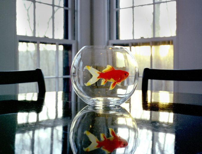 Rachel Hulin, Goldfish