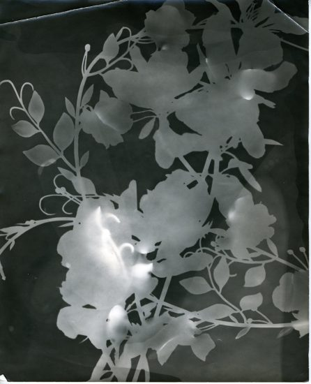 Mark Morrisroe, Untitled (Flower Study)