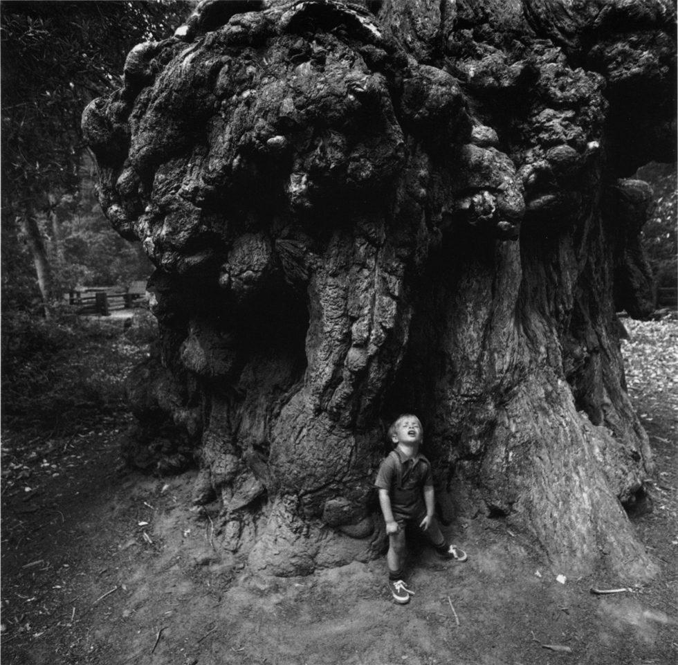 Boy Under Redwoods