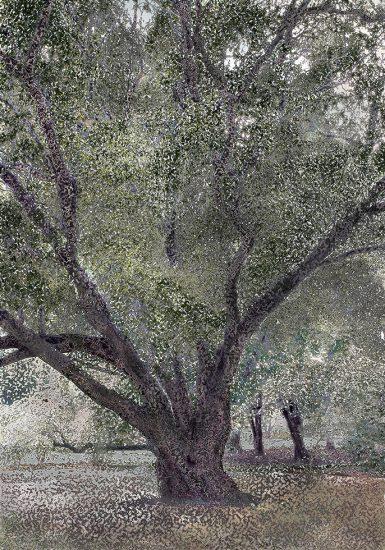 Aziz + Cucher, Twisty Tree