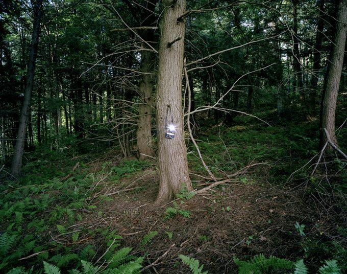 Adam Ekberg, A Camera in the Forest