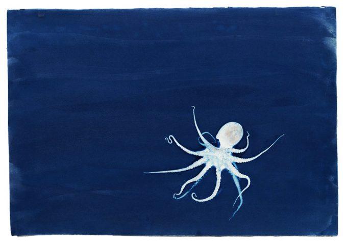 Brian Buckley, Octopus