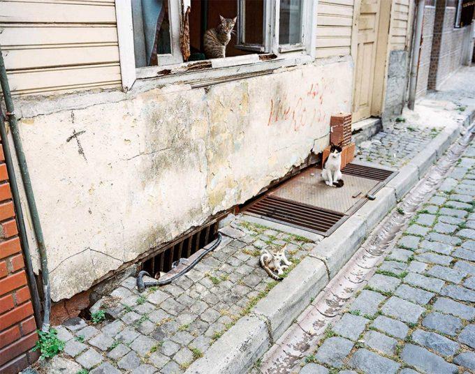 Palmer Davis, Stray Cats