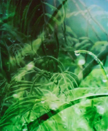 Sarah Meadows, Dewdrops